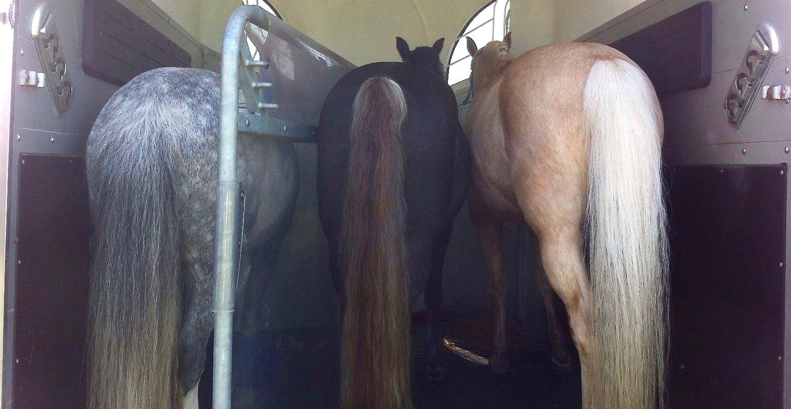Sieraden-van-paardenhaar